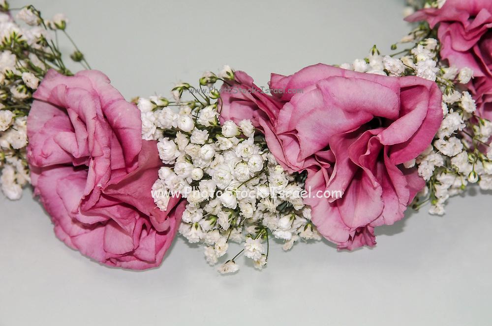 flower wreath on white background