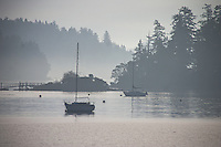 Two sail boats at anchor on a misty morning in calm water on Saltspring Island, BC, Canada. A small building and walkway are seen in silhouette above the water, with tall trees in the background.