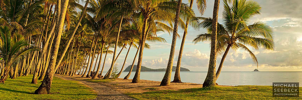 Early morning sunshine on a grove of coconut palms at Palm Cove.<br /> <br /> Code: HAQT0031<br /> <br /> Open Edition Print / Stock Image
