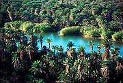 MEXICO, BAJA CALIFORNIA SOUTH Arroyo San Ignacio with date palms planted by the Spanish around their mission 200 years ago