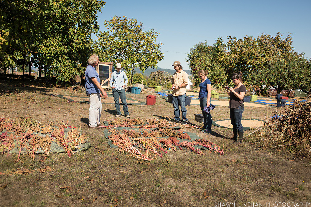 Frank Morton discusses his lines of amarath with Julie Dawson, Alex Wenger, Claire Luby, and Lane Selman at Wild Garden Seed farm in Philomath, OR.