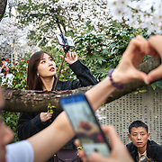 Nai Nai, a 23-year-old live-streamer in Shanghai, China, live-streams in Wuhan city. Nai Nai's fans are mostly Chinese men between 15 and 30 years old who post messages and virtual gifts, visible to everyone logged on to her chatroom. China's livestreaming industry reached 425 million subscribers in 2018 out of a current total internet user base of more than 829 million, according to government statistics cited in Chinese state media. Livestream hosting is an increasingly popular career choice, especially for young Chinese women like Nai Nai.