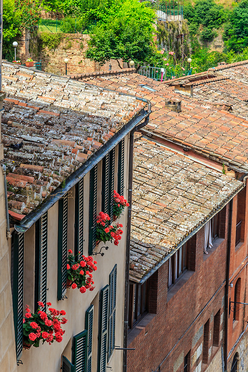 A flowers in Siena, Italy.