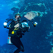 An underwater photographer photographing a scrawled filefish (Aluterus scriptus) in the Red Sea off Marsa Alam, Egypt.
