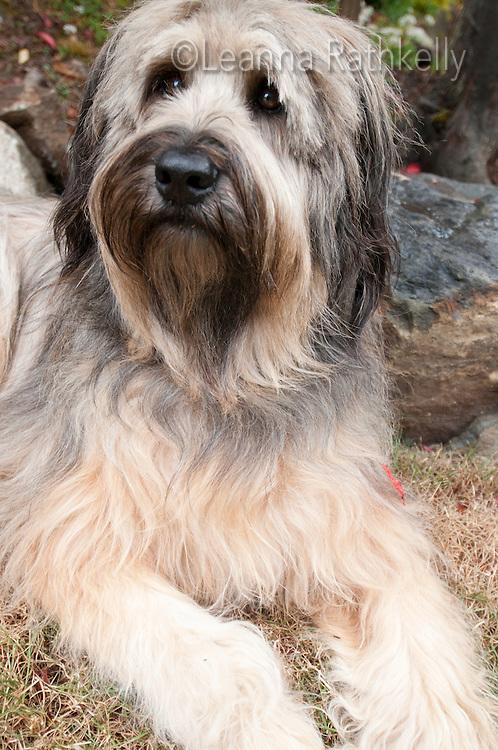 Artist Ginny Glover and her husband David Stuart own a large dog named Kali.