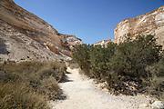 Dry riverbed in the Negev Desert. Israel