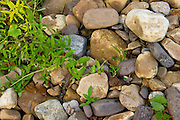 river bed rocks with green weeds