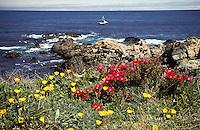 Wildflowers on the Mendocino Headlands