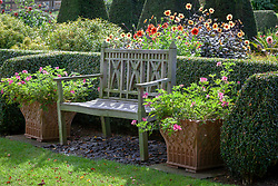 Wooden bench at Pettifers with terracotta containers of Pelargonium 'Lara Starshine' either side.