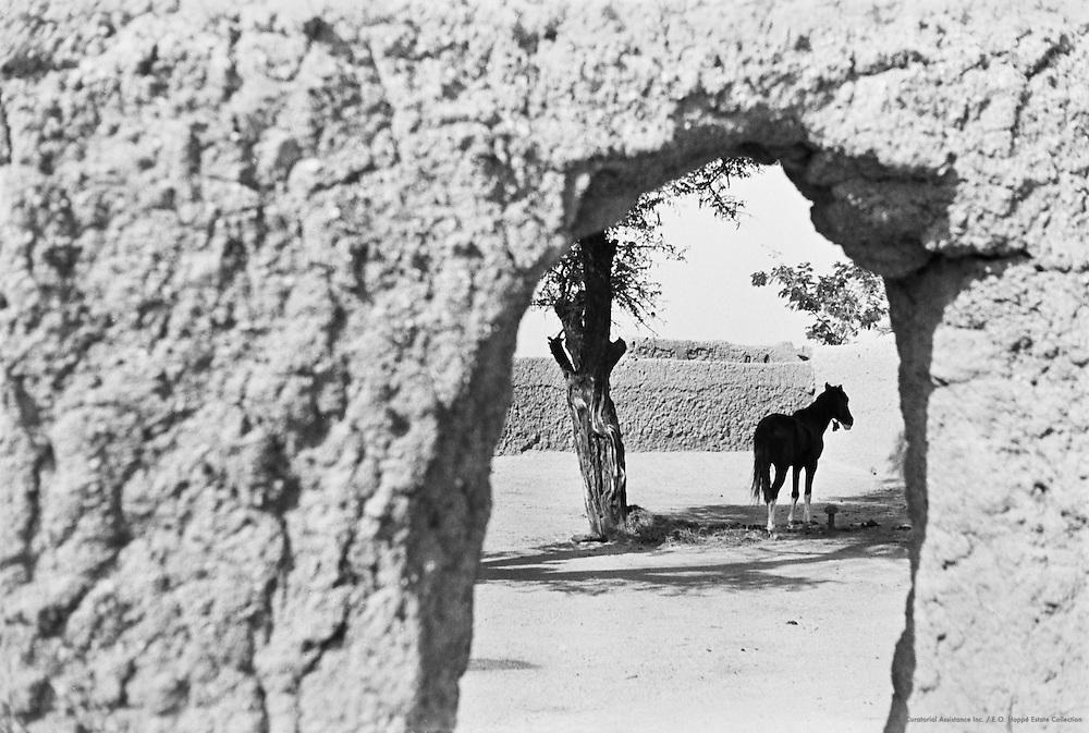 House, Horses in Courtyard, Kano, Nigeria, Africa, 1937