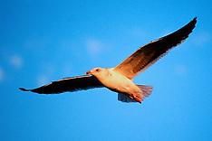 Birds - Unsorted