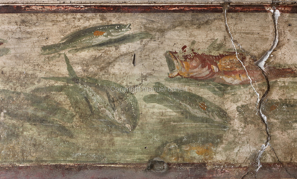 Fresco, detail, with different species of fish, painted after 62 AD in Pompeiian Fourth Style, upper frieze in the cubiculum off the atrium in the House of the Vettii, one of the largest houses in Pompeii, in the Parco Archeologico di Pompei, or Archaeological Park of Pompeii, Campania, Italy. Pompeii was a Roman city which was buried in ash after the eruption of Vesuvius in 79 AD. The site is listed as a UNESCO World Heritage Site. Picture by Manuel Cohen