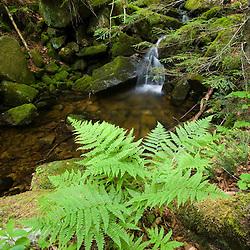 A stream cascades through the forest on Mondanock Mountain in Lemington, Vermont.  The Northeast Kingdom.