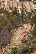 USA, Utah, Zion National Park, a small stream in the Eastern part of the park.