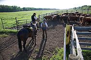 Photo Randy Vanderveen.Near Debolt, Alberta, July 22/08.Cowboys discuss some penned cattle.