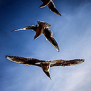 Birds. #prag #prague #praha #czechrepublic #sky #blue #animal #flying #tschechien #vogel #freedom #liberty #latergram