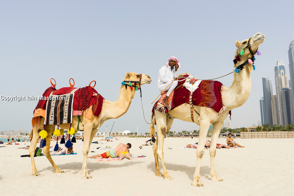 Camels on beach offering tourist rides in JBR district of Dubai United Arab Emirates