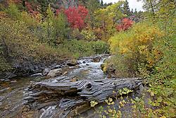 Old weathered log, Autumn, Palisades Creek, Swan Valley, Idaho