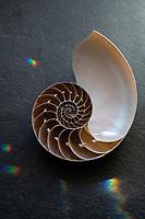 Nautilus seashell with rainbow light rain splatters.