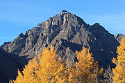 Pyramid Peak stands tall at 14,018ft above a valley of fall aspens.