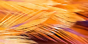 paintbrush, feather, abstract