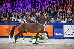 362, Monte Carlo TC<br /> KWPN hengstenkeuring - 's Hertogenbosch 2020<br /> © Hippo Foto - Dirk Caremans<br /> 01/02/2020