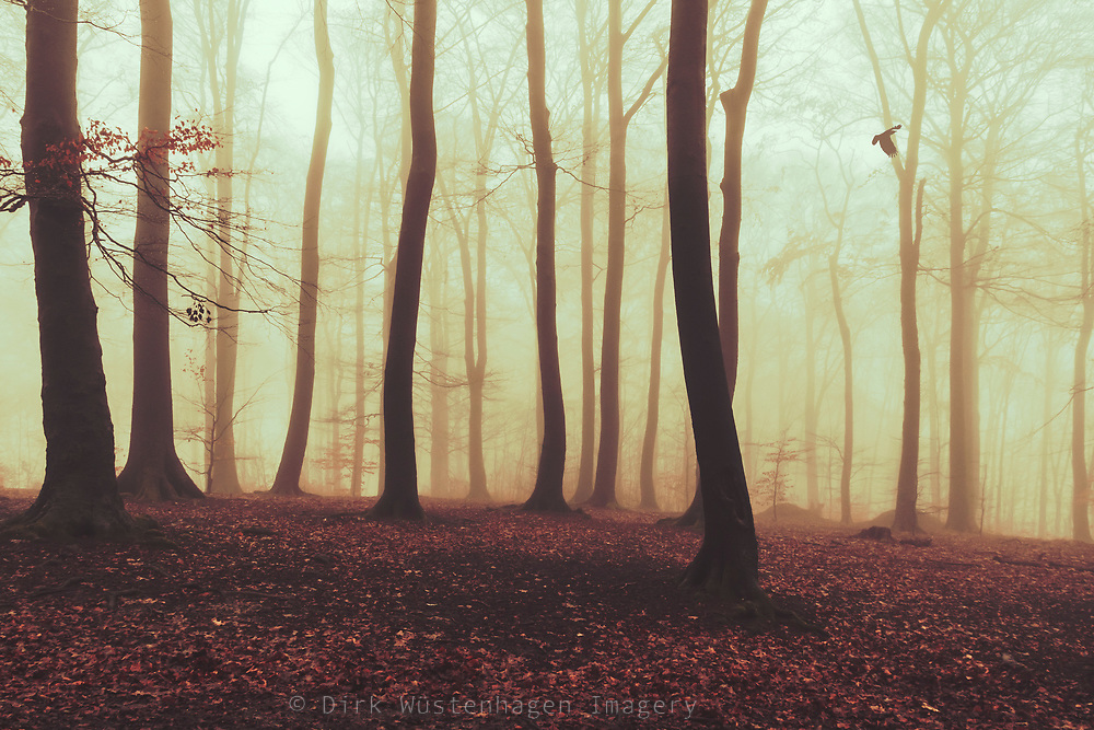 Forest on a misty autumn morning