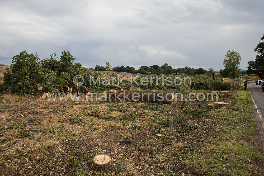 Oak trees felled alongside the Fosse Way in connection with the HS2 high-speed rail link are pictured on 24th August 2020 in Offchurch, United Kingdom. The controversial HS2 infrastructure project is currently expected to cost £106bn and will destroy or significantly impact many irreplaceable natural habitats, including 108 ancient woodlands.