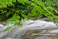 66745-04518 Middle Prong Little River in spring Great Smoky Mountains National Park TN