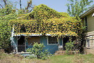 April 7, 2007,  Home destroyed by Hurricane Katrina in New Orleans covered in vines.