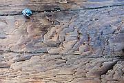 Driftwood exfoliation pattern. Lummi Island, in the Salish Sea, Whatcom County, Washington, USA.