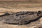 A corral of Lamas on the high Puna at approx 4000m in the Andes mountains