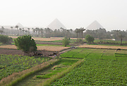 The Great Pyramids of Giza in the distance with farm fields being tended in the foreground, Cairo, Egypt,