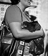 A woman carries a black chicken around the St. Bartolomeu church during the Saints celebration.  This tradition that dates back to the sixteenth century (1566), and it claims the devil is on the loose during this day. Every year on 24 August  faith and tradition join thousands of people at the feast of St. Bartolomeu do Mar, for ritual that mixes the sacred and the profane.