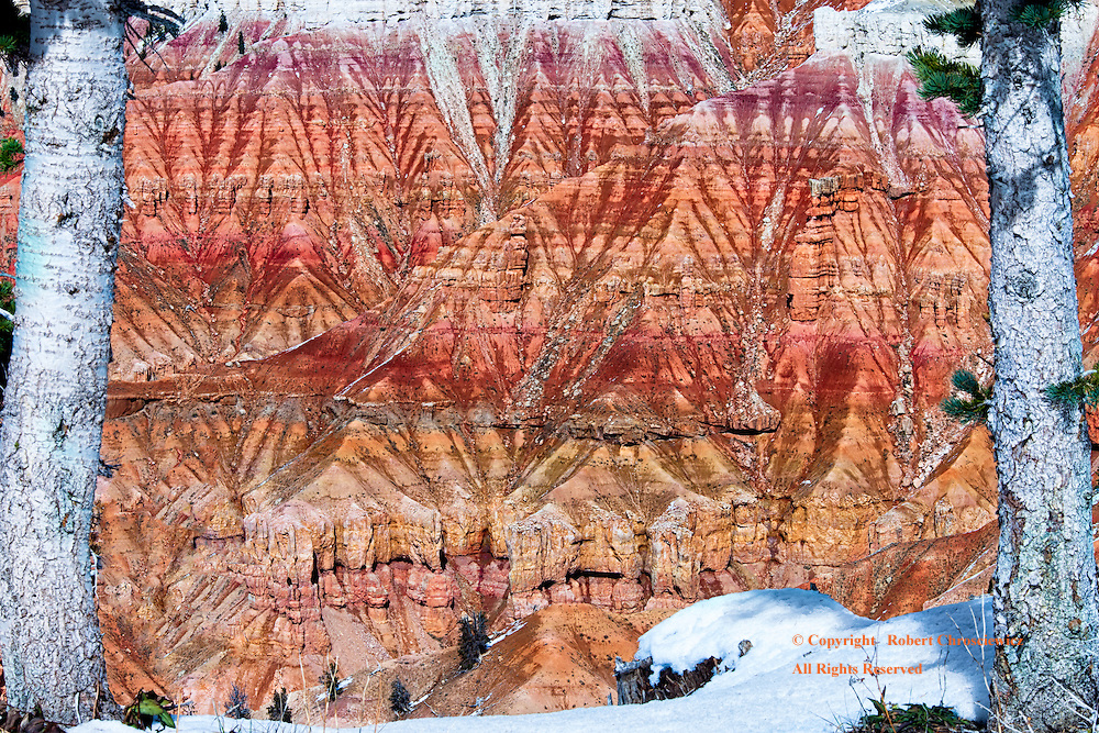 Autumn Cedar Breaks: Two white barked trees bookend this spectacular autumn scene, taken on high, with snow lightly dashed upon the orange – red striated rock of the Cedar Breaks National Monument, Utah United States of America.