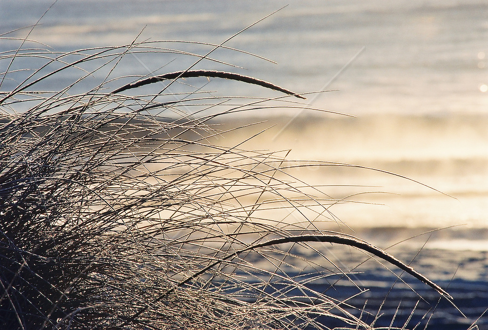 Beach grass by the water