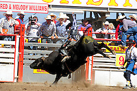 Kaycee Rose from Clovis, California takes on a ton of angry bull at the 102nd California Rodeo Salinas, which opened July 19 for a four-day run.