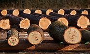 Submisja drewna w Puszczy Knyszyńskiej