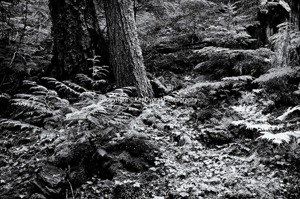 Glacier NP 2013<br /> edited 1/28/14<br /> converted to B&W