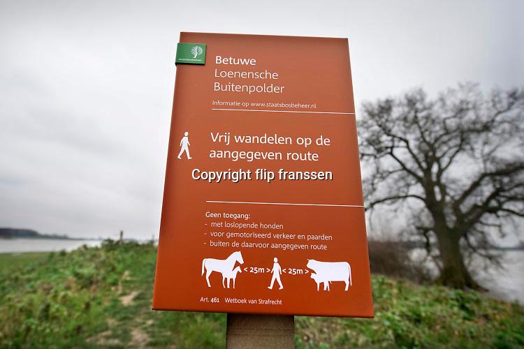 Nederland,  Maas en Waal, 6-3-2020 Het waterpeil in de rivier de Waal staat nog hoog. Uiterwaarden zijn ondergelopen, staan nog steeds onder water . De Loenensche buitenpolder in de betuwe (links op de foto) is volgelopen. Hier is afgelkopen jaren een waterberging aangelegd die ook een nieuw natuurgebied en wandelgebied heeft opgeleverd . Wandelaars wordt gewaarschuwt afstand te houden tot wilde grazers als galloway runderen en konikpaarden . Foto: Flip Franssen