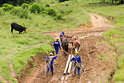 Santos Dumont_MG, Brasil...Operario transportando postes com carro de boi na eletrificacao rural proximo a Santos Drumont...The worker carrying electrics poles in oxcart for rural electrification near to Santos Drumont. ..Foto: LEO DRUMOND / NITRO