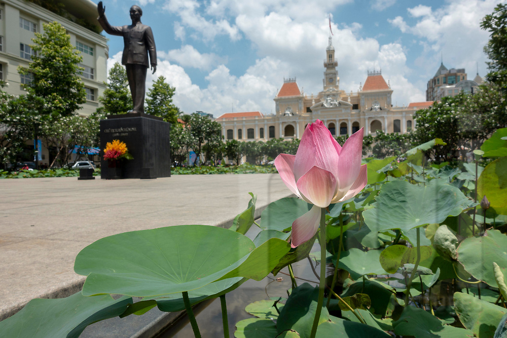 Lotus flower in the Memorial Park in front the City Hall, Ho Chi Minh city, Vietnam, Southeast Asia