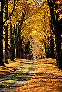NJ, Morris County, children walking down lane in autumn
