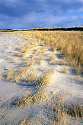 Cape Cod Sand Dune With Grass