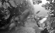 Maidenhead BERKS. UK.   Boulters Lock and Raymead Island 08:56:29  Sunday  11/09/2016<br /> [Mandatory Credit; Peter SPURRIER/Intersport Images]
