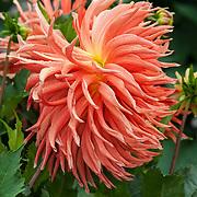 copyright thurman james / thurmansworld.com / photographer thurman james / pittsburg,ca usa / james211p@gmail.com