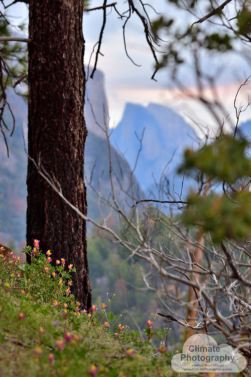 Flowers entering Yosemite Valley from the south, with Half Dome and El Capitan in the background.