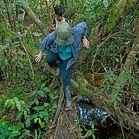 An adventurous hiker balances on a slippery log in an Amazon Jungle swamp near Peru's Yanayacu River.