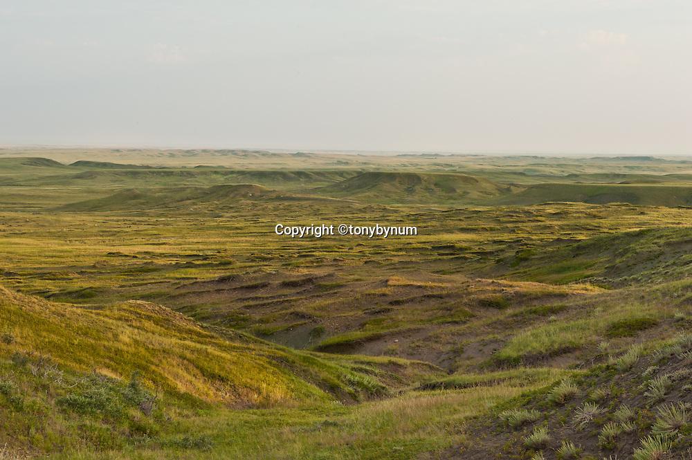 montana prairie, native short grass prairie, wild prairie, montana,