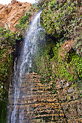 Ein Gedi sweet water springs, in the  judean desert, israel Israel, the lower waterfall in Wadi David